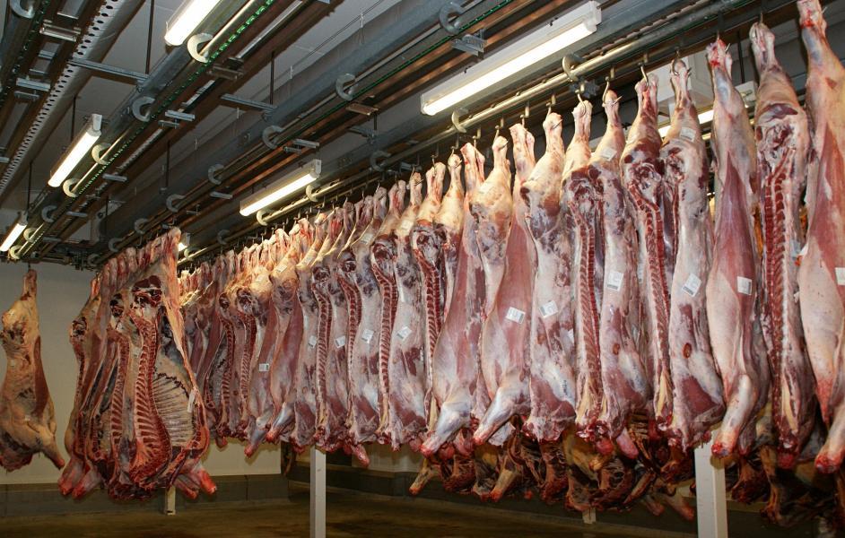 Geschlachtete Tierhälften, aufgehängt in einem Schlachthof