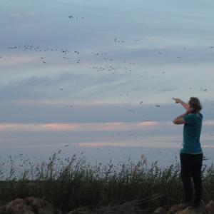 Frau zeigt auf am Himmel fliegenden Vogelschwarm