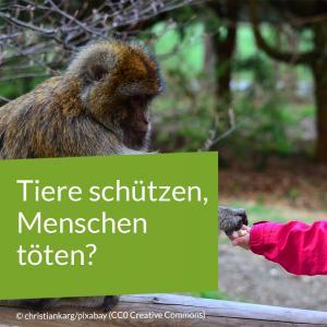 ein Kinde füttert einen Affen
